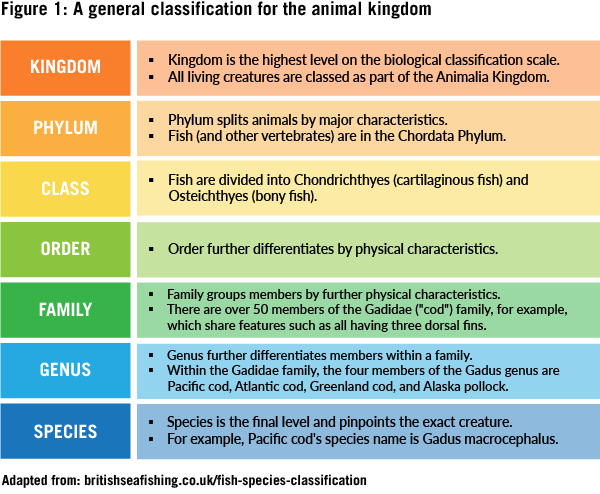 Pictured: A chart showing how the animal kingdom is classified, ranging from kingdom as the broadest category to species as the most narrow category.